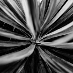 DSC09616 (Zengame) Tags: kyufurukawagardens rx rx1 rx1r sonydscrx1rsonnart235 sonnart235 sony zeiss garden gardens japan tokyo ソニー ツアイス 庭園 日本 旧古河庭園 東京 東京都