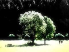 Autumn walk (PHOTOGRAPHY Toporowski) Tags: natur landschaft colorkey kontrast grün schwarz feld abstrakt green blick contrast herbst autumn baum landscape art mensch light friedlich nature kunst hood licht eschweiler