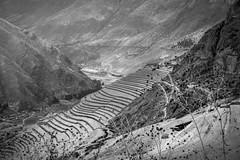 Días de fulgor vivo en la intemperie de los cuerpos (.KiLTЯo.) Tags: kiltro peru pisac vallesagrado ruins quechua inca terrace sacredvalley mountain agriculture