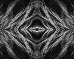 Grass Mirror Flipped (Macro Lord) Tags: icm intentional camera movement mirror mirrored photoshop bw grass abstract