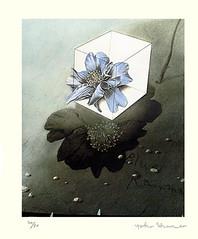 Unknown flower (Japanese Flower and Bird Art) Tags: flower yoko shono modern intaglio print japan japanese art readercollection
