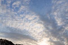 DSC09667 (Zengame) Tags: rx rx1 kyufurukawagardens rx1r japan gardens zeiss garden tokyo sony 日本 東京 庭園 旧古河庭園 ソニー ツアイス sonnart235 sonydscrx1rsonnart235 東京都