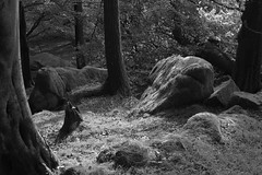 WoodlandPlace (Tony Tooth) Tags: nikon d600 nikkor 50mm glade wood woodland hillside rocky hencloud upperhulme staffs staffordshire staffordshiremoorlands countryside spooky bw blackandwhite monochrome
