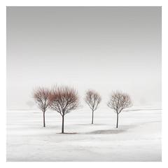Winter Poetry IV (Vesa Pihanurmi) Tags: trees foggy misty winter snow nature minimalism espoo finland