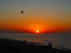 FISHER P9300943 (hlh 1960) Tags: nature natur landschaft landscape boot boat fisher fishing meer wasser water licht light farben colour sun sunrise sonne sonnenaufgang sol soleil atardecer strand mirrow spiegelung bird wave wellen