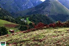 Col de Lie (https://pays-basque-et-bearn.pagexl.com/) Tags: 64 altitude aquitaine arette colinebuch france nouvelleaquitaine pyrénéesatlantiques chevaux coldelie hautbéarn montagne nature pyrénées sudouest valléedubarétous cheval