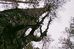 2019.10 Contax T rangefinder 35mm film camera expired film 06-2017 Kodak ULTRA MAX ISO400 no flash (24) (nefotografas) Tags: rangefinder contaxt 201910 noflash 35mmfilmcamera freshfilm iso200 kodakgold