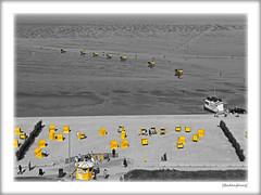 Go West (Badenfocus_1.500.000+ views_Thanks) Tags: badenfocus fujifilmx20 duhnen neuwerk kutsche pferd strand gelb sw bw elbe wattenmeer
