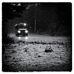 Day end deluge 2 (Thiophene_Guy) Tags: thiopheneguy originalworks olympustoughtg4 tg4 olympustg4 olympusstylustg4 rain rainyday lowperspective floorperspective groundperspective splash raindrop backjet schoolbus bus