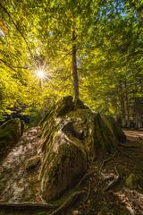 Solid Foundation (Sebastian Tontsch) Tags: forest tree sun laowa sony a7r flm cp38