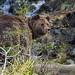Bear near the waterfall