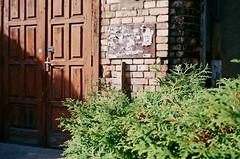 2019.10 Contax T rangefinder 35mm film camera expired film 06-2017 Kodak ULTRA MAX ISO400 no flash (16) (nefotografas) Tags: contaxt 201910 rangefinder noflash 35mmfilmcamera iso200 kodakgold freshfilm