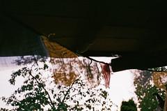 2019.10 Contax T rangefinder 35mm film camera expired film 06-2017 Kodak ULTRA MAX ISO400 no flash (10) (nefotografas) Tags: rangefinder noflash contaxt 35mmfilmcamera 201910 iso200 kodakgold freshfilm