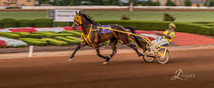 "Harness Racing at the Red Mile (JuanJ) Tags: nikon d850 lightroom art bokeh lens light landscape happy naturephotography outside nature people white green red black pink skyportrait location architecture building city square squareformat instagramapp shot awesome supershot beauty cute new flickr amazing photo photograph fav favorite favs picture me explore interestingness friends dof sunset sky flower night tree flowers portrait fineart sun clouds racing harnessracing redmile lexington kentucky bluegrass equine jockey horse nikonfxshowcase ""nikon fx showcase"""