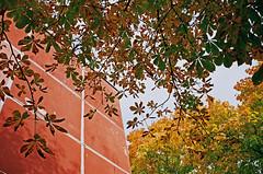 2019.10 Contax T rangefinder 35mm film camera expired film 06-2017 Kodak ULTRA MAX ISO400 no flash (34) (nefotografas) Tags: rangefinder contaxt 201910 noflash 35mmfilmcamera iso200 kodakgold freshfilm