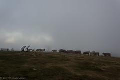 20190923-DSC_6760 (rolfsteinebrunner) Tags: sonne sonnenuntergang nikon d7200 wolken nebel schwarzwald belchen oberrheintal vogesen rhein belchengipfel rinder
