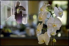 seven years (1crzqbn) Tags: me sliderssunday reflections octoberisbreastcancerawarenessmonth sfmoma inmygarden bokeh shadows light pink orchid seven textures ❤️ 1crzqbn