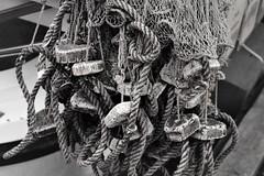 _Q3A1971 (www.ilkkajukarainen.fi) Tags: cerkko net fishing ammatti kalastaja silakka jerring strömming fish kala verkko cork photography fotography festival 2019 markkinat suomi finland finlande eu europa scandinavia mustavalkoinen blackandwhite monochrome