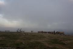 20190923-DSC_6758 (rolfsteinebrunner) Tags: sonne sonnenuntergang nikon d7200 wolken nebel schwarzwald belchen oberrheintal vogesen rhein belchengipfel rinder