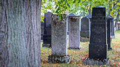 Cemetery (Akito-X) Tags: autumn bavaria bayern canoneos7dmarkii digger graveyard gräber herbst jewish jüdisch neumarkt sigma30mmf14dchsmart cemetery friedhof