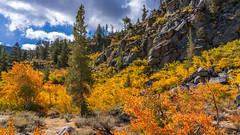 Another view of my favorite location. (topendsteve) Tags: sierra sierras us395 eastern lake mountain outdoors sky clouds fall autumn yellow orange tree trees water aspen bristlecone bishop