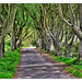 Bregagh Road NIR - Dark Hedges 02