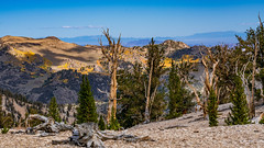 Bristlecone Pine Forest. Patriarch Grove. 11,000 Feet... (topendsteve) Tags: sierra sierras us395 eastern lake mountain outdoors sky clouds fall autumn yellow orange tree trees water aspen bristlecone bishop