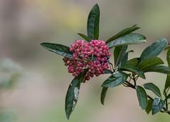 In the wild garden (nickinthegarden) Tags: abbotsfordbccanada