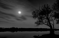 Moon and Trees (Faron Dillon) Tags: lake bw nightsky sony 1635 sunset nature cool blue yellow wilcox richmondhill ontario autumn longexposure boat water a7riii peaceful