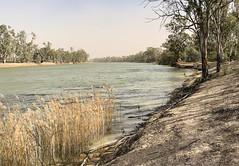 Dust storm in Mildura (Marian Pollock) Tags: australia mildura murrayriver reeds riverbank gumtrees duststorm dust victoria nsw overcast mutedcolours river water