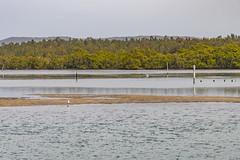 A Hazy Day Bay Waterscape (Merrillie) Tags: landscape davistown australia birds egret newsouthwales wet nsw brisbanewater wild wildlife seagull bird animal outdoors waterscape fauna centralcoast bay coastal