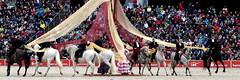 Marbach Hengstparade 2019 (HOR-BS 696) Tags: marbachhengstparade2019 marbachlandesgestüt hauptlandesgestütmarbach berndsontheimer badenwürttemberg gomadingen pferde cheval horse