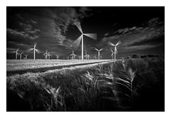 Little Cheyne Court Wind Farm / October 7th (Edd Allen) Tags: windturbine wind turbine windfarm farm farmland country countryside bw blackandwhite reeds uk england eastsussex southeast nikond610 nikon d610 zeissdistagon18mm zeiss distagon 18mm sunset longexposure infrared littlecheynecourt romneymarsh