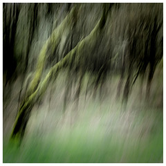 ICM Trees 2 , Findatie (wwshack) Tags: icm intentionalcameramovement kinross lochleven lochlevenheritagetrail scotland treeabstracts trees