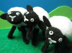 MM 7 Oct 2019: Baaad Boys (jefalump) Tags: macromondays inarow three sheep macro wool atsh