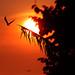 Sunset Flying