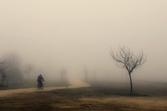 Mist (una cierta mirada) Tags: mist fog nature landscape tree dog doggy bike silhouette path canon eos 6d 50mm f14