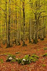 Forest (pascual 53) Tags: canon oes7d 50mm bosque otoño colores urbasa navarra largaexpo naturaleza