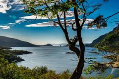 Tree View (*Capture the Moment*) Tags: 2019 cruise cruiseship feuerland sonya6300 sonye18200mmoss sonyilce6300 südamerika tierradelfuego