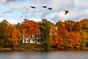 Autumn colors (Antti Tassberg) Tags: puu ruska lintu hanhi syksy linnunlaulu helsinki suomi töölönlahti autumn bird colors fall finland scandinavia tree