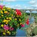 Le Wimereux en fleurs à Wimereux.
