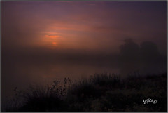 The Morning.. (Picture post.) Tags: landscape nature green sunrise water mist reflections reeds paysage arbre trees brume eau autumn