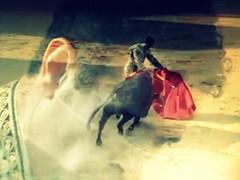 dreaming (aficion2012) Tags: corrida bullfight artofbullfighting toros tauromachie tauromaquia torero taureaux madridejos victor puerto cmm victorino martin espana spain espagne
