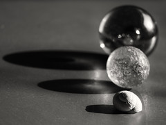 Differences... (Ageeth van Geest) Tags: shadows hardlight marble blackwhite monochrome blackandwhite bw shell stilllife inarow macromondays