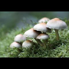 Abitanti della Lama (NAIGO) Tags: fungo lama forestadellalama casentino forestecasentinesi muschio canon 7d 70300 300mm trekkeggiare