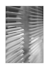 léger, parfumé, flottant (Armin Fuchs) Tags: arminfuchs nomansland lavéranda véranda diagonal blinds light niftyfifty anonymousvisitor thomaslistl wolfiwolf jazzinbaggies