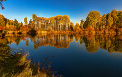 Autumn on the Deschutes River (Cole Chase Photography) Tags: deschutesriver reflections autumn october bend oregon aspentrees fall pacificnorthwest