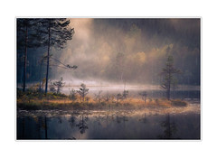Foggy moment (andreassofus) Tags: fog foggy mist misty water lake reflection reflections eventing fall autumn sweden glaskogen värmland nature landscape intimatelandscape tree trees pine pinewood woods forest outdoor september tranquility light mirror grass