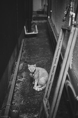 猫 (fumi*23) Tags: ilce7rm3 sony sel55f18z 55mm sonnartfe55mmf18za a7r3 animal alley cat chat katze neko blackandwhite bw monochrome street sonnar zeiss ねこ 猫 ソニー 路地