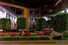 20190929-65-Corporate (Roger T Wong) Tags: 2019 australia melbourne rogertwong sel24105g sony24105 sonya7iii sonyalpha7iii sonyfe24105mmf4goss sonyilce7m3 victoria corporate garden night office